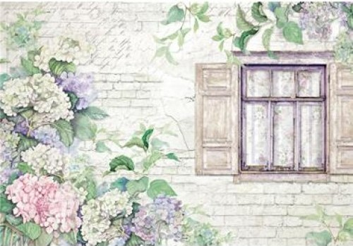 Hydrangeas and windows - A3